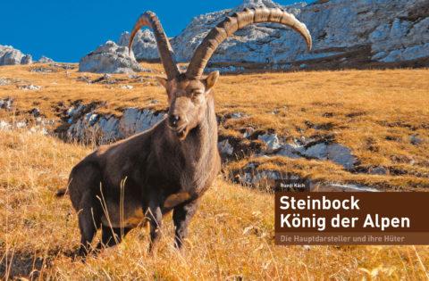 Steinbock – König der Alpen